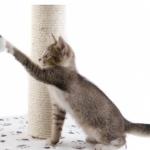 Ejercicio físico para tu gato