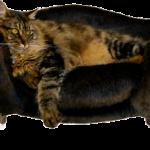 Los gatos de interior, cuidados