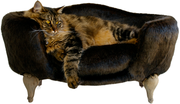 Los gatos de interior